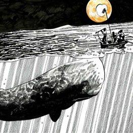 Una balena bianca tra le righe